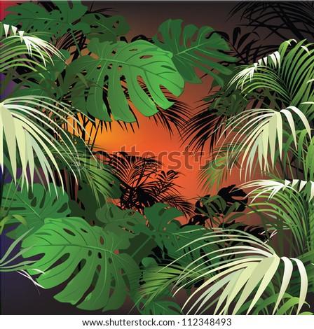 tropical landscape  tropical