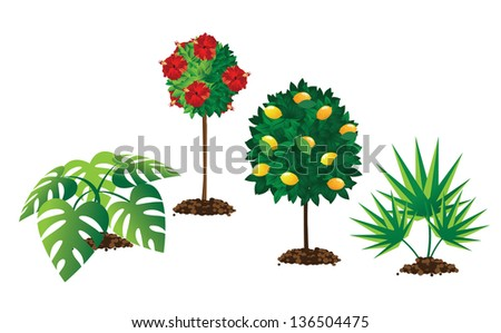 Tropical landscaping plants. EPS 10 vector, grouped for easy editing. No open shapes or paths.