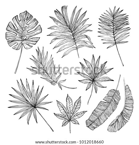 tropical leaf silhouette elements set isolated on white background. Palm, fan palm, monstera, banana leaves in line style. Hand drawn line art. Vector illustration in black and white colors