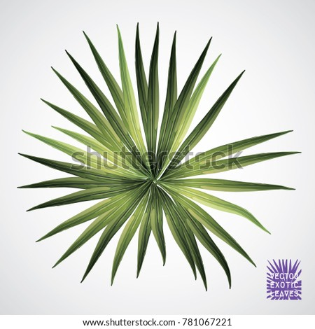 tropical leaf vector green