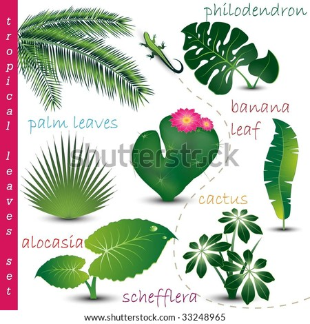Stock Photo Tropical Leaves Collection