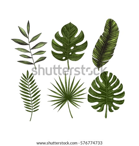 Tropical leaves collection. Engraved jungle leaves. Palm leaves. Vector illustration