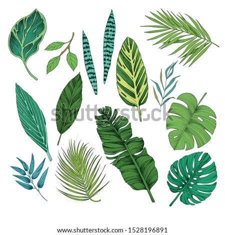 Tropical leaves collection. Vector isolated elements on the white background. ストックフォト ©