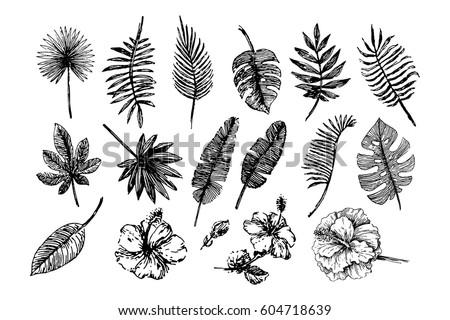 Tropical leaves illustration
