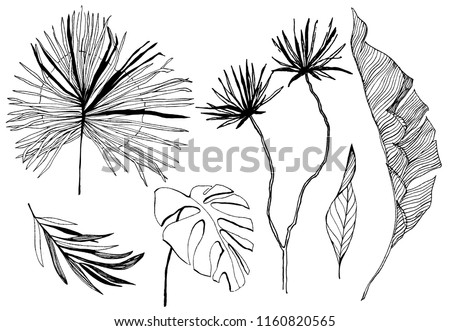 tropical leaves illustration. vector set. hand drawn art. - Shutterstock ID 1160820565