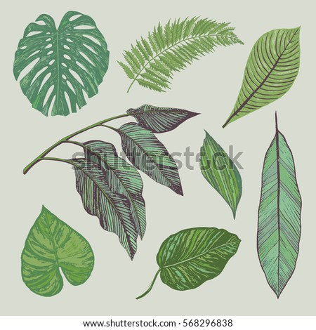 tropical leaves ink drawing illustrations vector set #568296838