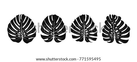 Tropical leaves of Monstera Deliciosa. Exotic floral silhouettes. Summer vector illustration.