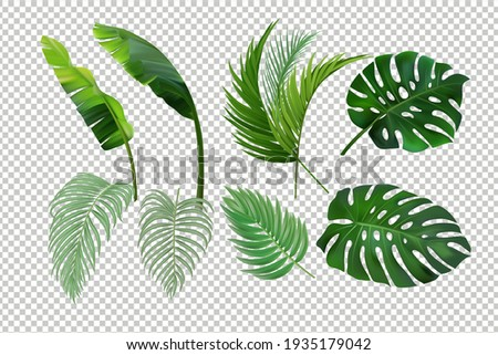 Tropical leaves set isolated. Palm leaves. Banana leves. Monstera. Stock fotó ©