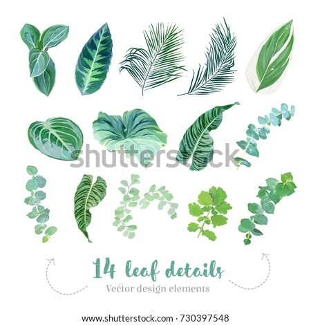 Tropical leaves vector big collection. Exotic islands greenery. Baby blue eucalyptus, palm foliage, maidenhair fern, paradise plants mix. Watercolor style set. All elements are isolated and editable.