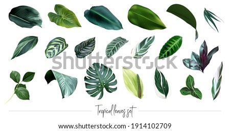 Tropical leaves vector big collection. Exotic islands greenery. Emerald green monstera, palm foliage, calathea, paradise plants mix. Watercolor style set. All elements are isolated and editable.