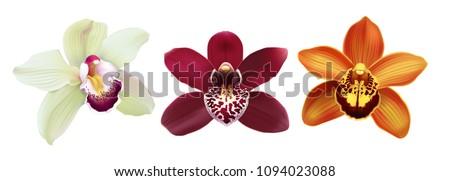 tropical orchid cymbidium