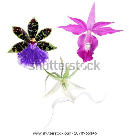tropical orchids   barkeria