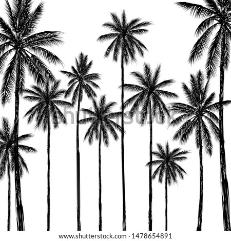 Tropical palm tree on white background, Vector design