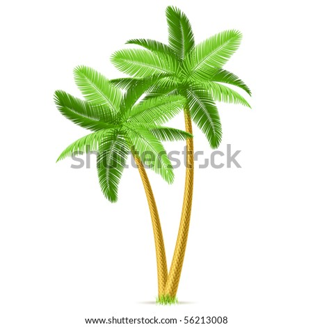 Tropical palm trees. Detailed vector.