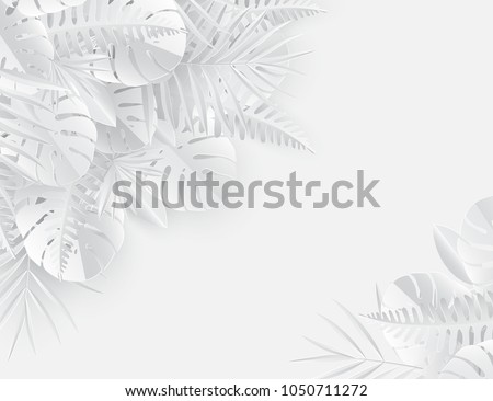 tropical paper palm  monstera