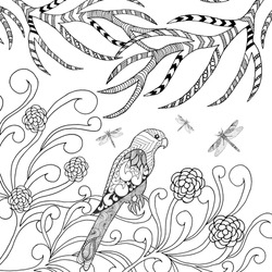 Tropical parrot bird coloring page. Animals. Hand drawn doodle. Ethnic patterned illustration. African, indian, tribal, zentangle, totem tatoo design. Sketch for tattoo, poster, print or t-shirt