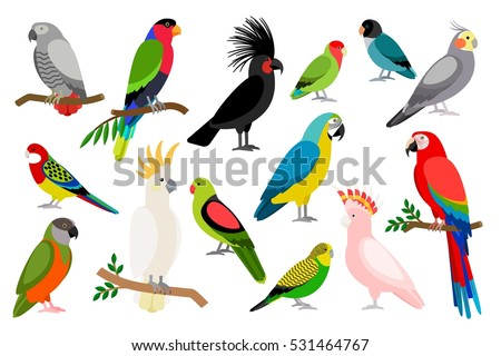 Shutterstock Tropical parrot set with colored feathers and wings. Vector cartoon parrots isolated on white background.
