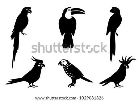 Tropical parrot set with feathers and wings. Black silhouette parrots, illustration of exotic bird parrot. Pet birds collection.