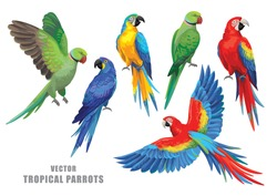 Tropical parrots collection. Vector isolated elements on the white background.