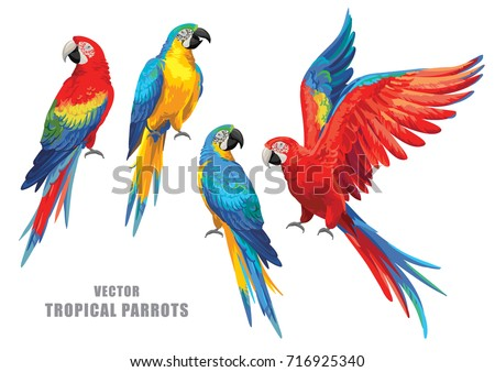 tropical parrots collection....