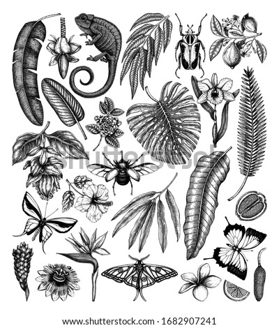 Tropical plants and animals vector collection. Hand drawn exotic flowers, citrus fruits, palm leaves, tropical insects and chameleon. Vintage botanical sketches  for summer or island design templates stock photo