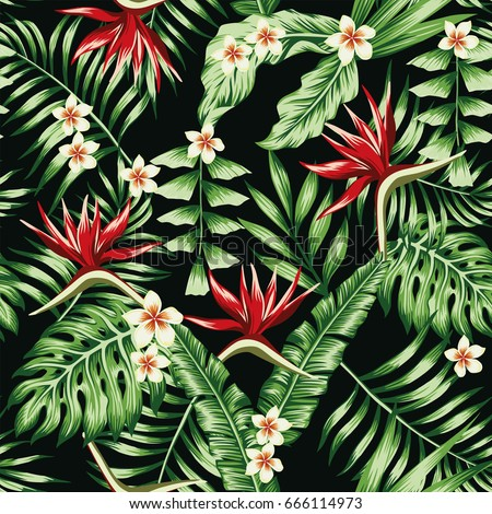 tropical plants leaves and
