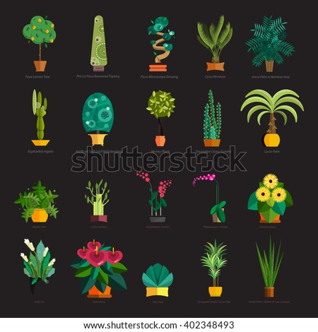tropical plants set isolated