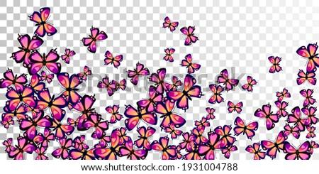 tropical purple butterflies