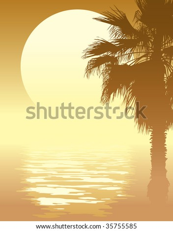 Tropical sunset with palm tree on a beach.
