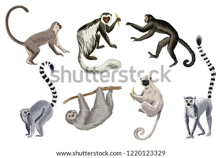 Tropical vintage wild animals clip art. Monkey, lemur, sloth wildlife print.