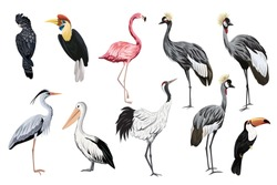 Tropical vintage wild birds clip art. Crane, toucan, flamingo, parrot, pelican, heron wildlife print.