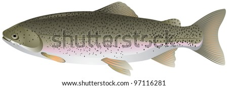 Trout, freshwater fish vector image - stock vector