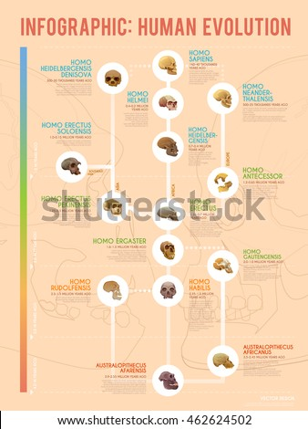 true human evolution vector web