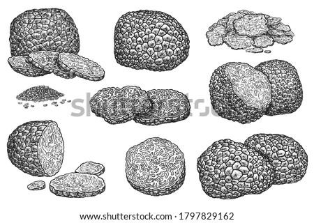 Truffle mushroom. Expensive delicatessen mushroom whole, sliced, half and seed grain illustration. Hand drawn truffle sketch vector set isolated on white background. Autumn forest food harvest