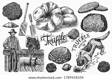 Truffles mushrooms set. Hog and Lagotto Romagnolo dog. Engraved hand drawn vintage sketch. Ingredients for cooking food. Woodcut style. Vector illustration. Foto stock ©