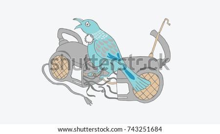 tui bird singing on the radio