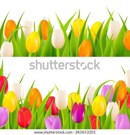 tulip border set with gradient
