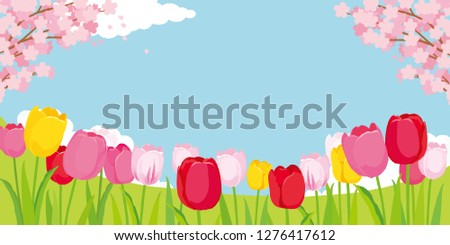 tulip fields and cherry