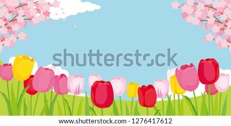 tulip fields and cherry