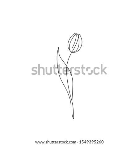 tulip flower continuous line
