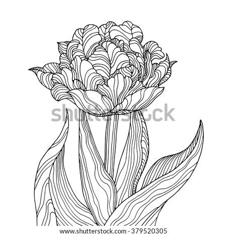 tulip flower  forest plant line