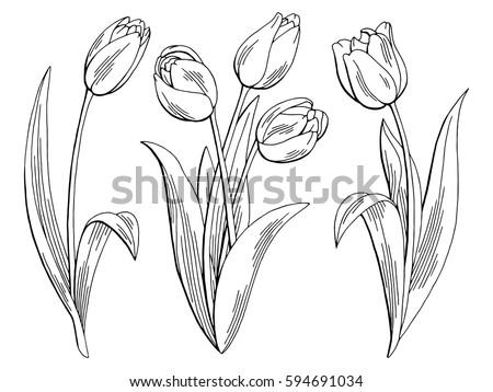 tulip flower graphic black