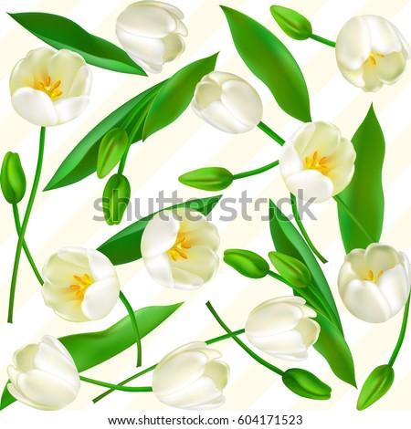 tulip flower holiday background