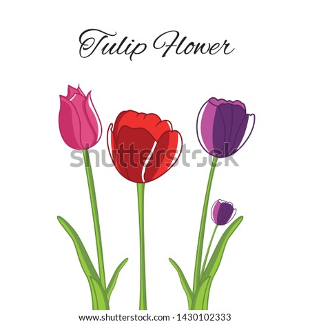 tulip flower illustration 3