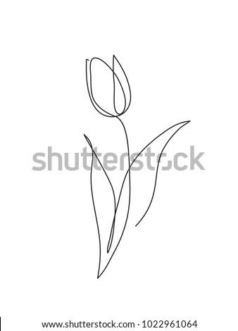 tulip flower line art