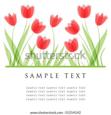 Tulip flowers. Design for greeting card - stock vector