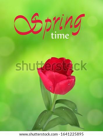 tulip on green nature