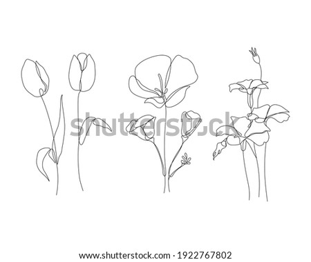 tulip, poppy, and corn cockle flowers illustration in one line art style. continuous drawing in vector best used for icon, wall art prints, posters, magazine, postcard, etc.