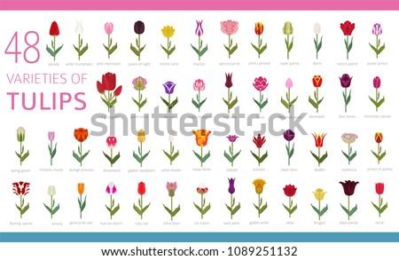 tulip varieties flat icon set