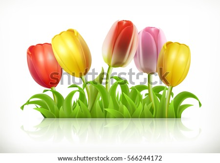 tulips flowers and spring grass